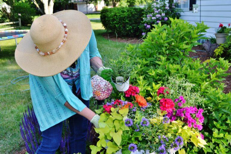 woman planting new flowers in garden